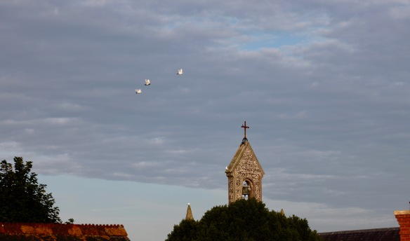 Doves flying round belfry 3