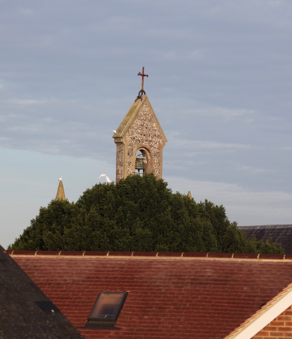 Doves and belfry 1