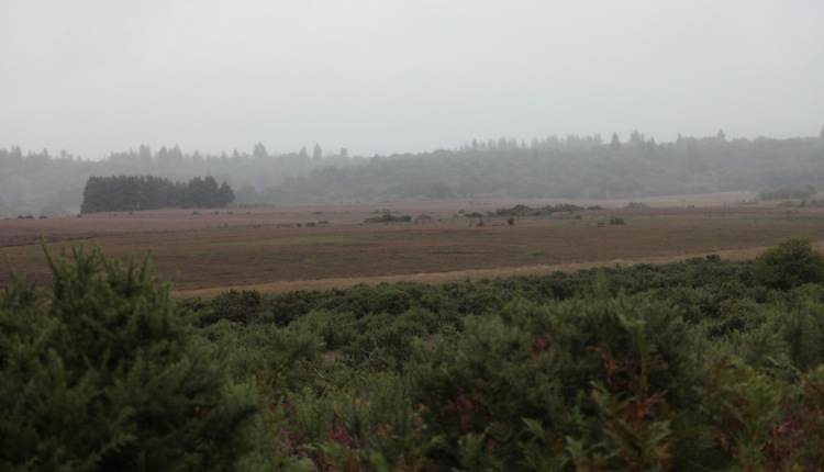Landscape overcast