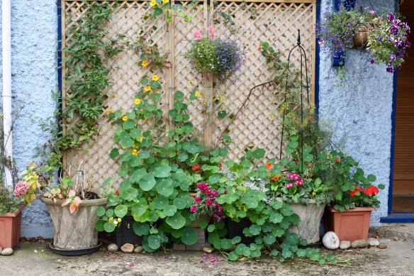 Plants in front of garage door