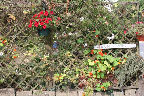 Trellis and hanging baskets