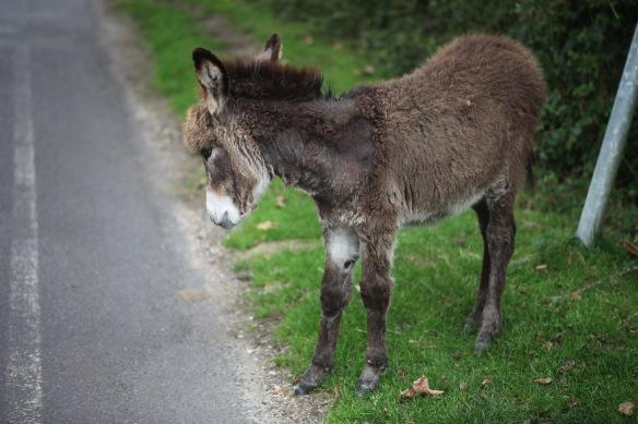Donkey foal 1