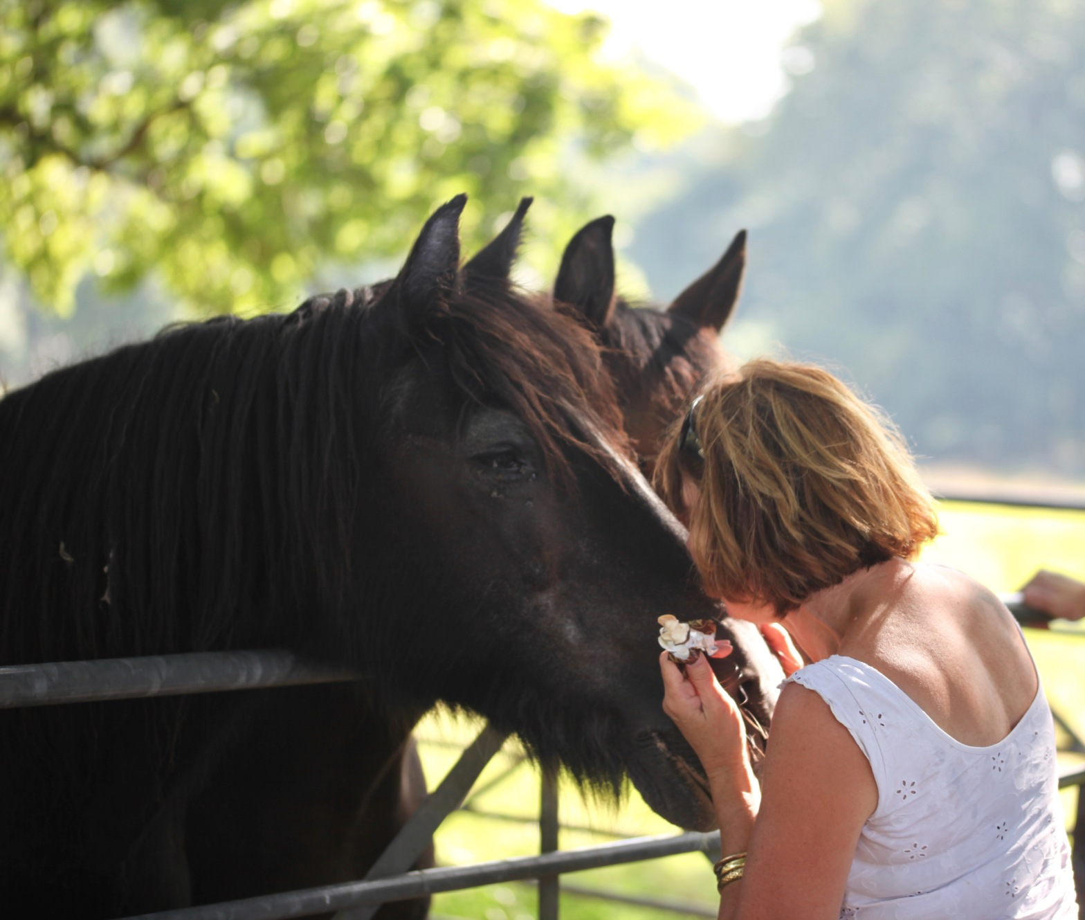 Heather and horses 1