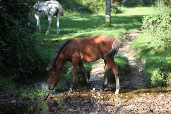 Foal at pool 2