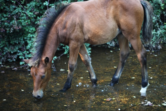 Foal at pool 3