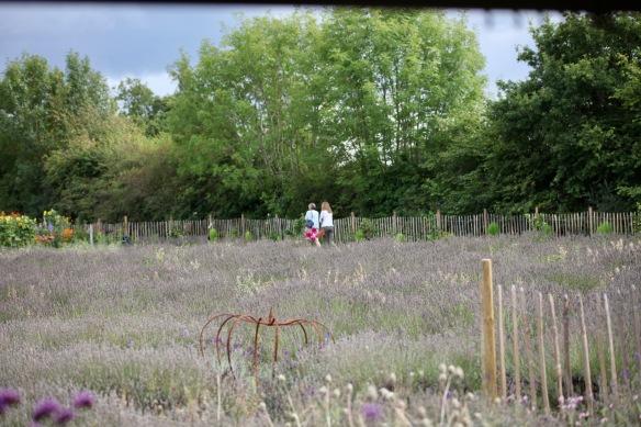 Lavender Farm 5
