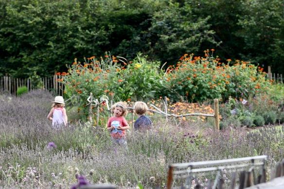 Children at Lavender Farm 1