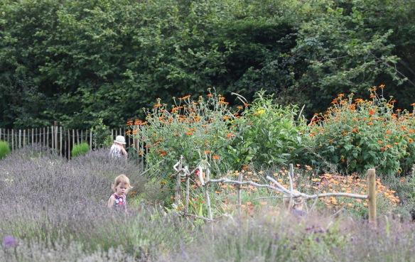 Children at Lavender Farm 2