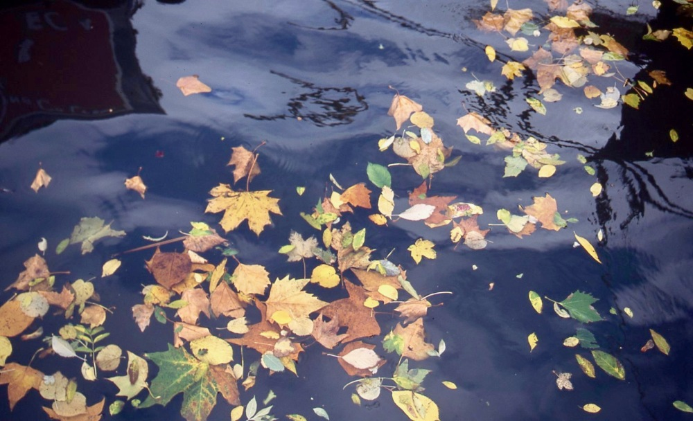 Leaves on canal 11.04