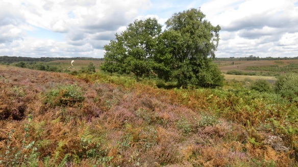 Heather, bracken, landscape