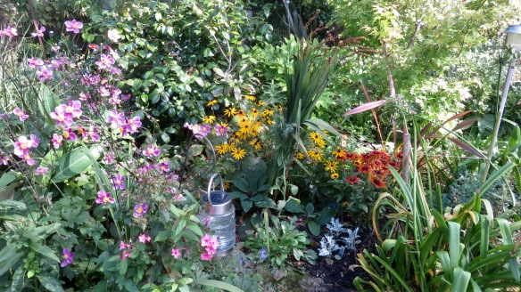 Palm Bed -Japanese anemones and rudbeckias