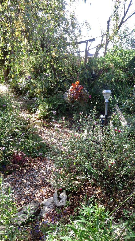 Heligan Path begonias