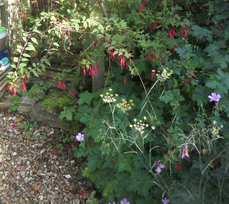 Fuchsia and fennel in Elizabeth's Bed