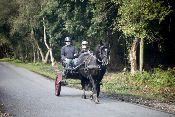 Couple in horse and trap