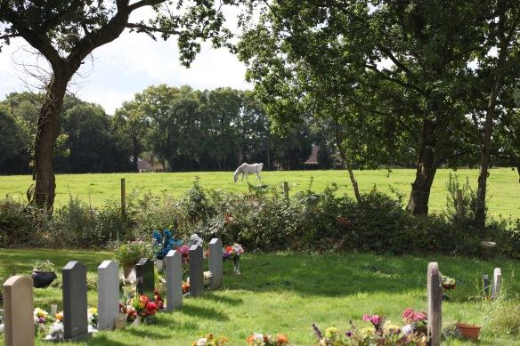 Gravestones and pony