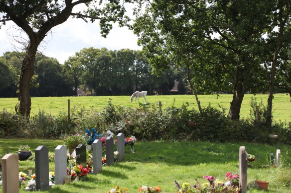Gravestones and pony