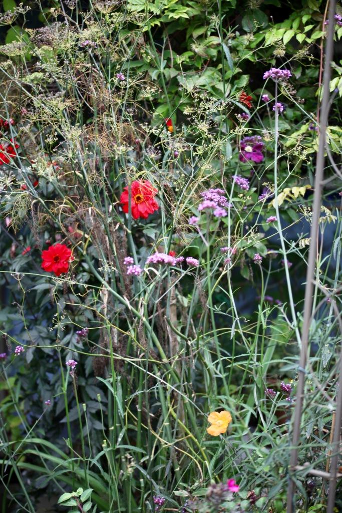 Dahlias, poppy etc