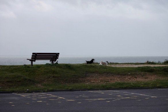 Bench and dogs