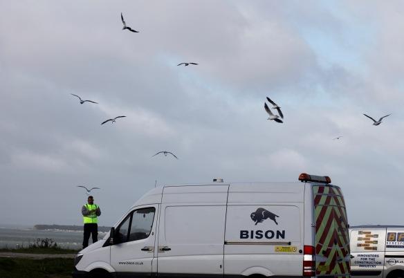 Feeding gulls 1