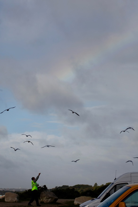 Feeding gulls with rainbow 1