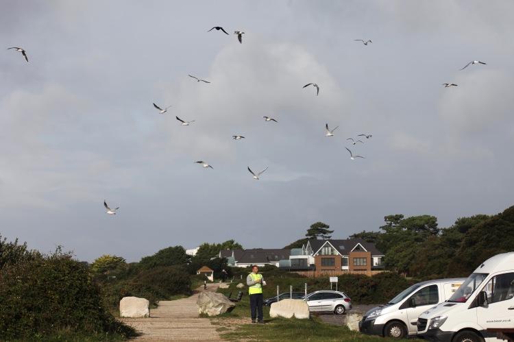 Feeding gulls 2
