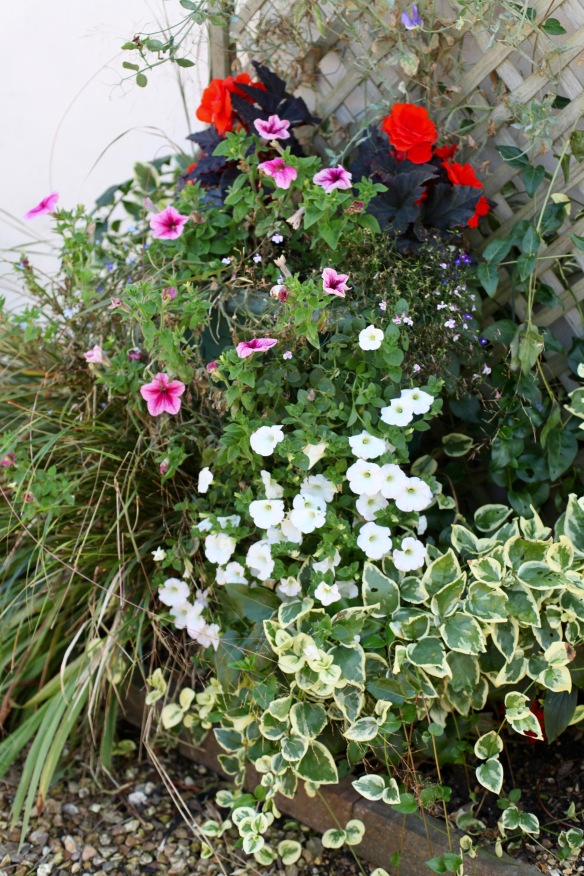 Petunias and begonias