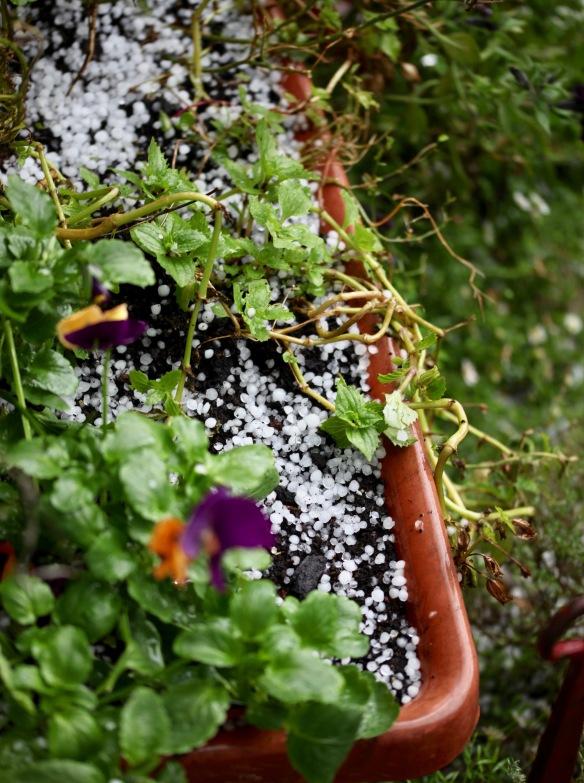 Hailstones 2