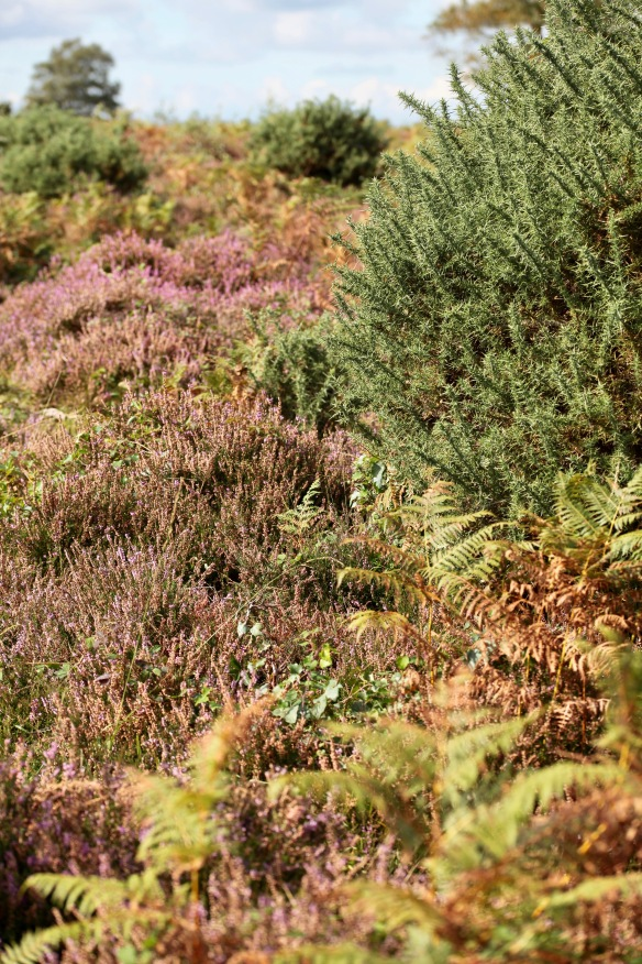 Heather, bracken and gorse
