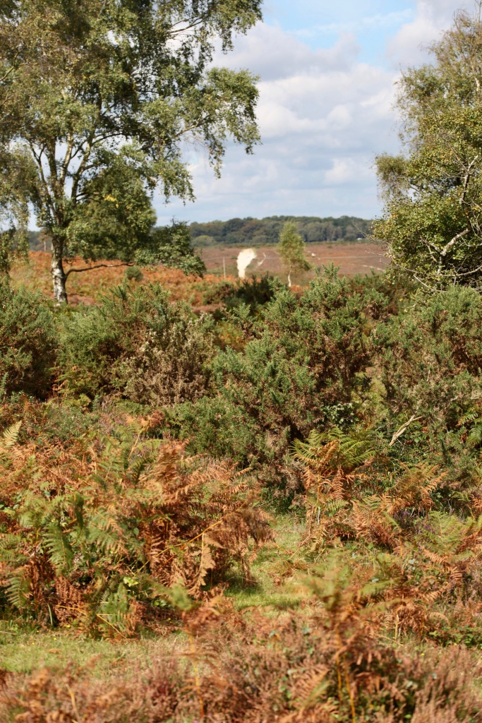 Heather, bracken, trees