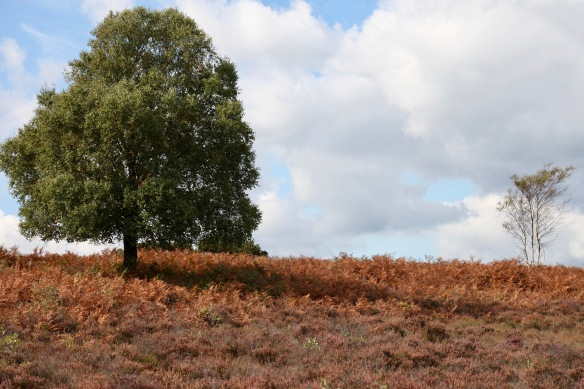Bracken and trees