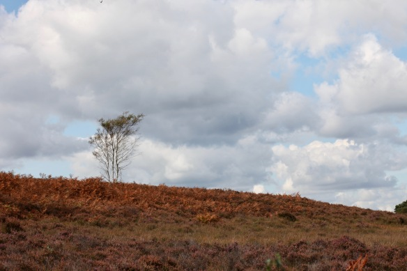 Bracken and tree