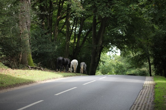 Ponies by roadside