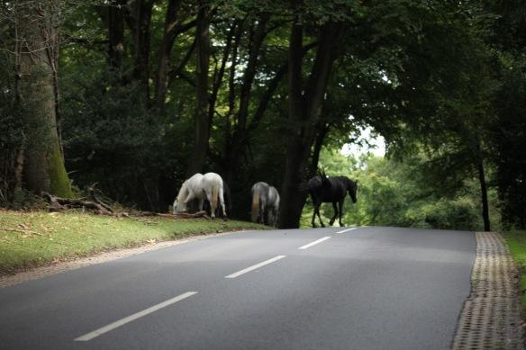 Ponies crossing road 1