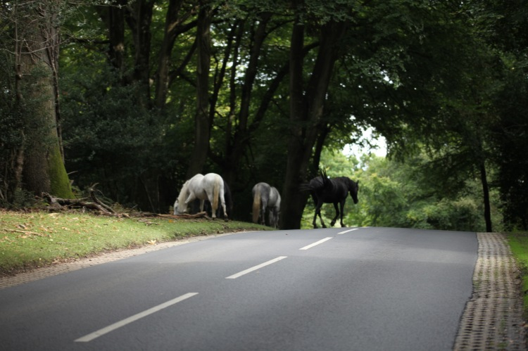 Ponies crossing road 1
