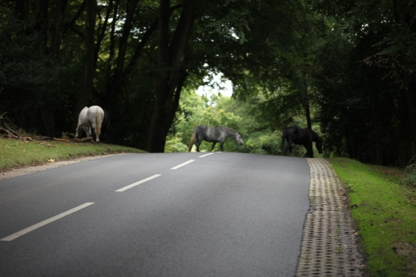 Ponies crossing road 2