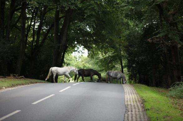 Ponies crossing road 3