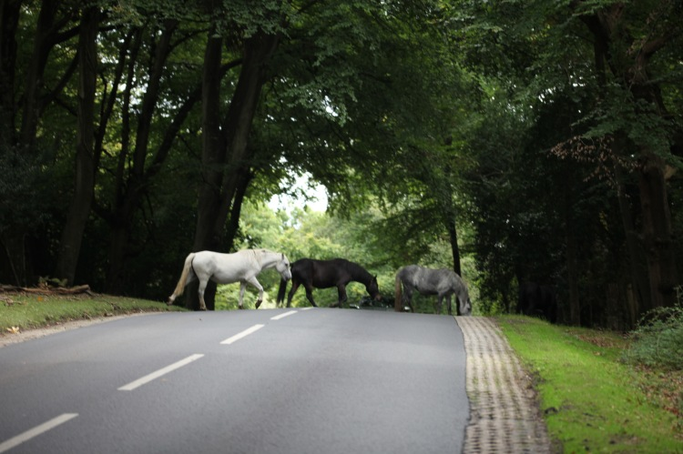 Ponies crossing road 3