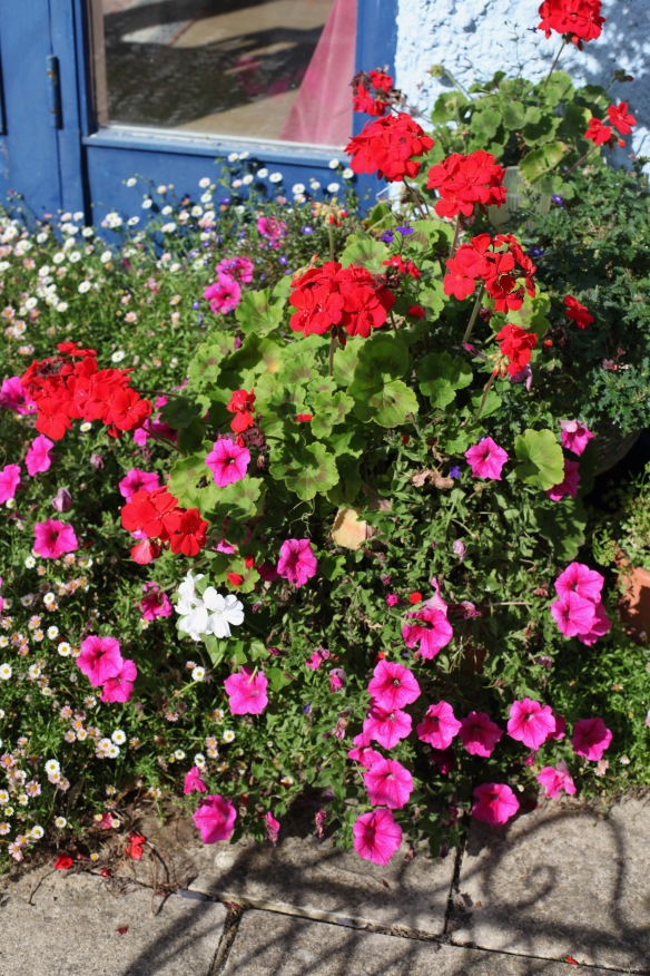 Petunias, geraniums, and erigeron