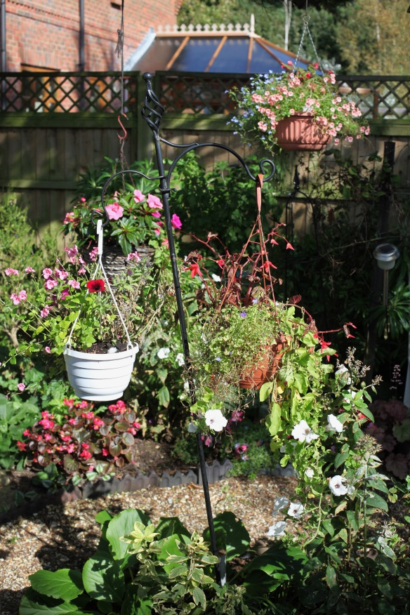 Hanging baskets over Shady Bed