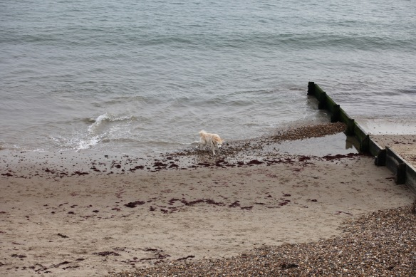 Retriever on beach 1