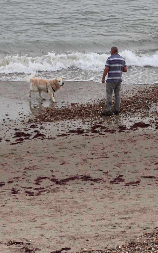 Man and retriever on beach 1