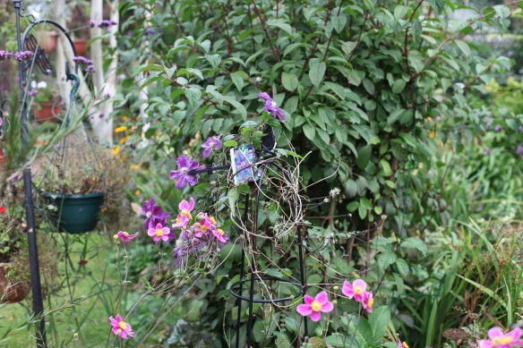 Clematis and Japanese anemones