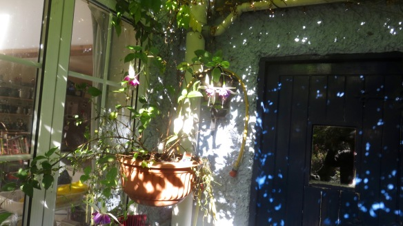 Dappled stable door
