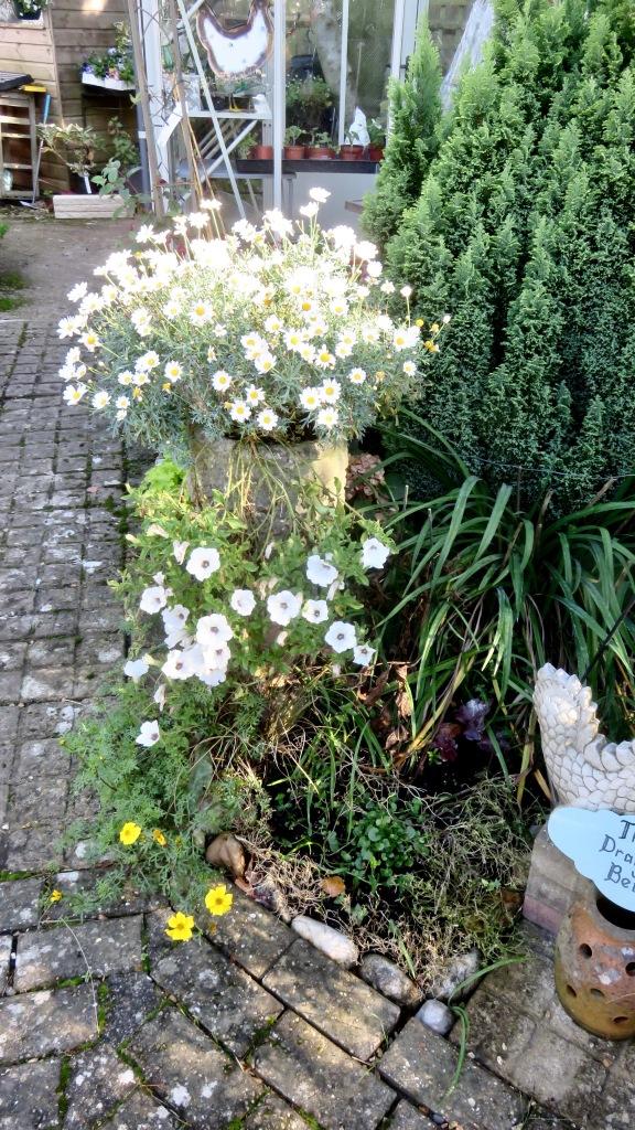 Marguerites, petunias, bidens