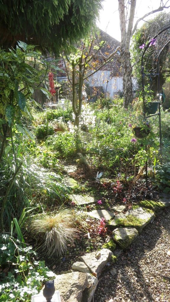 Garden view across Cryptomeria Bed