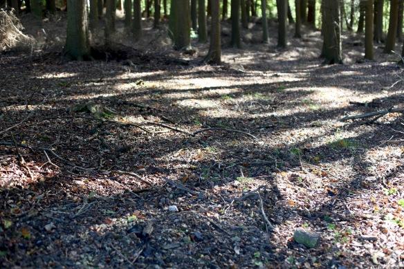 Shadows on forest floor