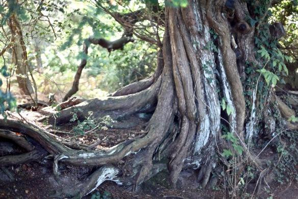 Tree bole 1