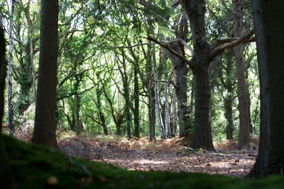Forest scene 2