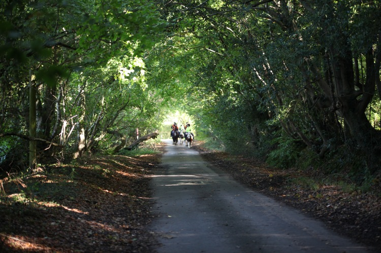 Horse riders on Charles's Lane 5