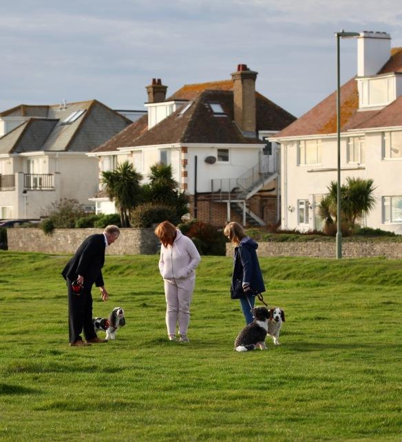 Meeting of dog walkers